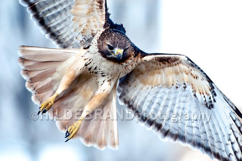 http://www.hildebrandphotography.com/sierra