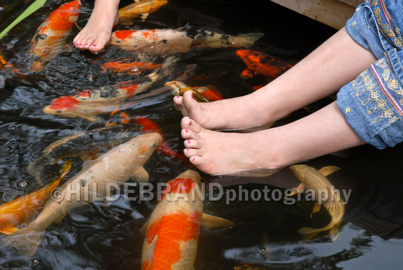 Koi Fish and Childrens Feet